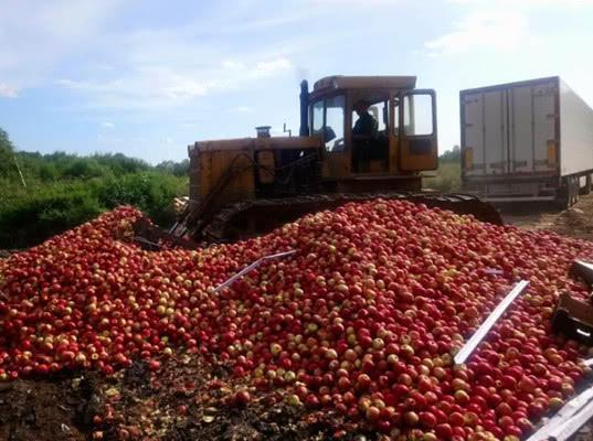 21 тонну польских яблок раздавили в Себеже - Криминал