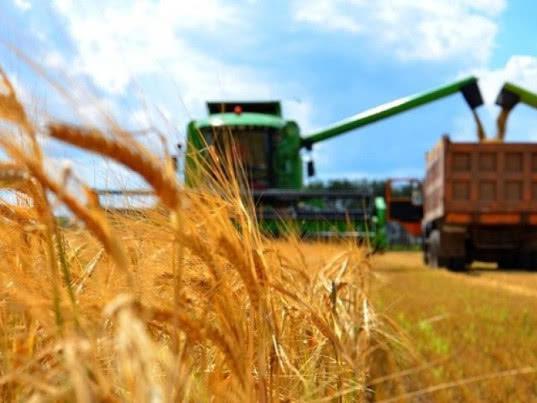 Зерно доросло до трейдинга