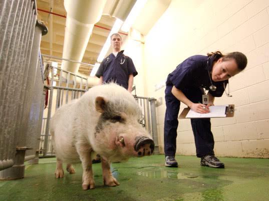 В ЕАЭС Единые ветеринарные требования гармонизируют с международными стандартами - Новости таможни