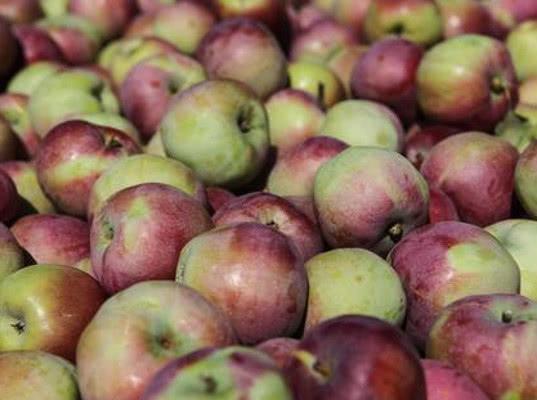 Смоленские таможенники выявили 80 тонн фруктов неизвестного происхождения, ввозимых из Белоруссии - Криминал