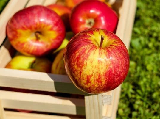 В Курскую область запретили ввоз молдавских яблок, зараженных плодожоркой - Криминал
