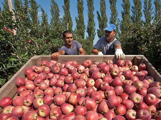Додон: «Только на яблоках отмена пошлин принесет €10-15 млн» - Обзор прессы