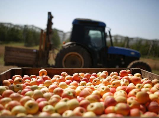 Россельхознадзор оценит яблочную мощность Беларуси