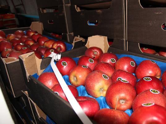 Украинские яблоки уничтожены в Омской области