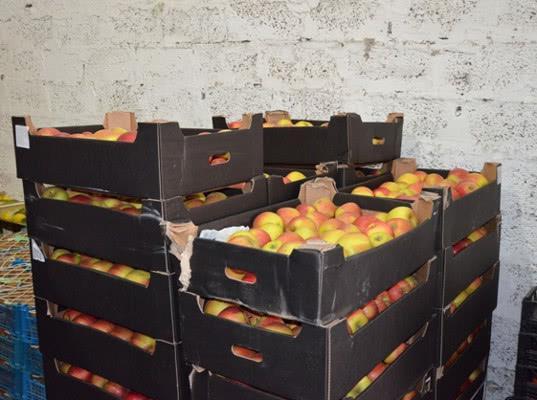 В Оренбурге 507 кг яблок переработали в биогаз