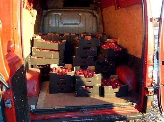 В Санкт-Петербурге уничтожены запрещенные к ввозу в Россию украинские яблоки - Криминал