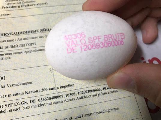Инкубационные яйца из Германии задержаны в аэропорте Пулково - Криминал