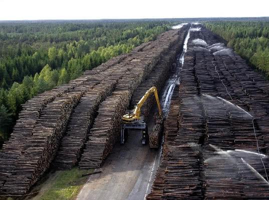 Сибирского леса хватит на 15 лет - Экономика и общество