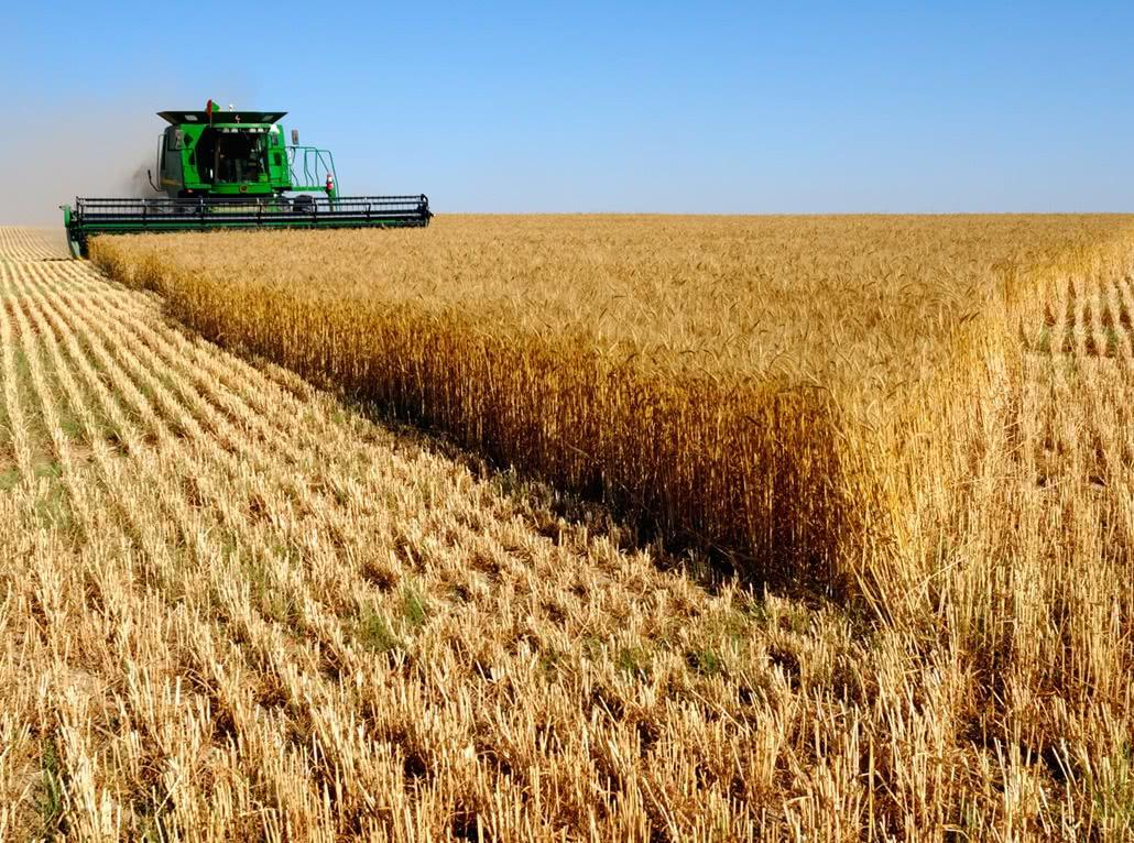 Экспорт зерна нарастят за счёт увеличения посевных площадей - Обзор прессы
