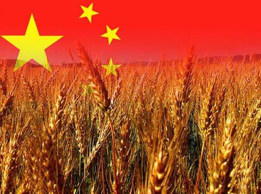 В текущем сельскохозяйственном году экспорт российского зерна в Китай превысил 1 млн тонн - Новости таможни