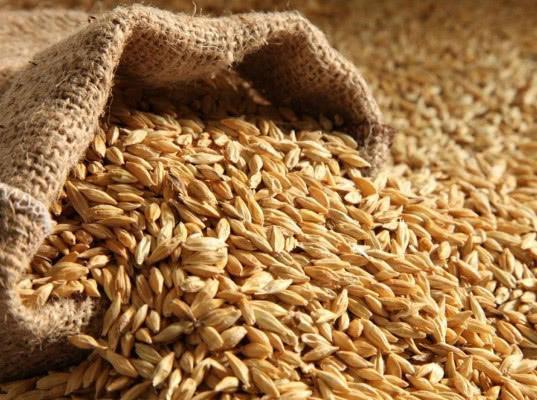 Эксперты: введение ограничений на экспорт зерна лишь ускорит темпы вывоза этой продукции