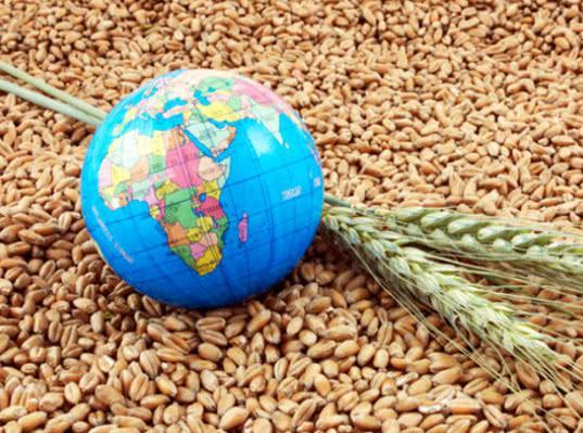Дворкович сообщил о продлении нулевой пошлины на экспорт пшеницы - Новости таможни