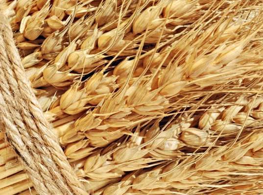 В структуре российского экспорта лидируют зерно и рыба - Новости таможни
