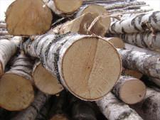 Власти Татарстана попросили ввести запрет на экспорт березовой древесины - Новости таможни