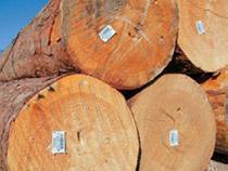Экспорт лесоматериалов, продекларированных в регионе деятельности Сибирского таможенного управления, в 2015 году - Новости таможни - TKS.RU