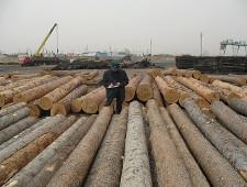 Оформление лесоматериалов под контролем у Читинской таможни - Новости таможни