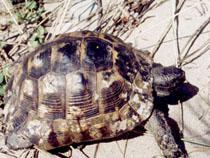 Астраханские таможенники пресекли попытку контрабанды 600 черепах - Кримимнал - TKS.RU