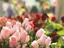 В канун 8 Марта в Россию ввезли рекордное количество цветов - Новости таможни - TKS.RU