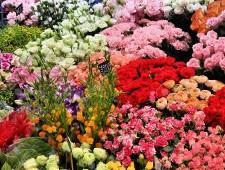 Экспорт цветов может быть налажен из Владивостока в Японию - Обзор прессы - TKS.RU