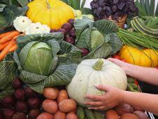 В прошлом году доля импортного продовольствия на российском рынке снизилась до 13,7% - Обзор прессы - TKS.RU