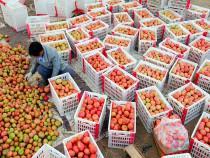В 2015 году на КПП Маньчжоули выросли объемы экспорта в Россию китайских фруктов - Новости таможни