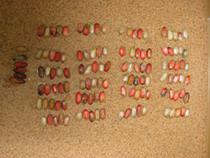 10 лет за контрабанду наркотиков - Криминал