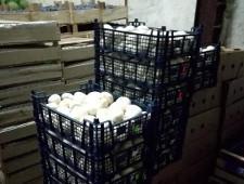 Польские грибы и капуста пущены под нижневартовсий пресс - Кримимнал - TKS.RU