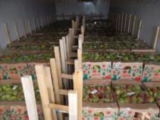 Более 7 тонн груш вернули в Казахстан - Кримимнал - TKS.RU