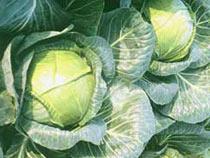 Овощи и фрукты не вышли за пределы Украины - Криминал