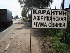 В Псковской области введен карантин по африканской чуме свиней