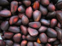 Красноярские таможенники выявили факты уклонения от уплаты таможенных платежей при ввозе из Китая кедровых орехов