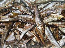 40 тонн рыбы задержали до погрузки - Кримимнал - TKS.RU
