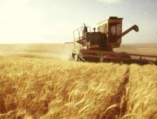 В Госдуме попросили кабмин в скором времени развернуть зерновые интервенции - Экономика и общество - TKS.RU