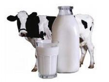 Дворкович: дефицит молока собственного производства в России составляет 25% - Экономика и общество