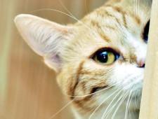 В Нижнем Новгороде примут на работу кота с окладом 20 тысяч рублей - Экономика и общество - TKS.RU