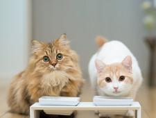 Петербургские коты могут остаться без европейского лакомства - Кримимнал - TKS.RU