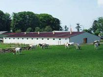 Россельхознадзор с 1 февраля этого года снимает временные ограничения на импорт животных из ряда областей Чехии - Новости таможни - TKS.RU