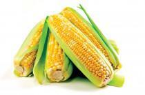 Россия предупредила США о возможном запрете на поставки кукурузы  - Новости таможни - TKS.RU