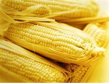 Кукуруза, соя, мед и шоколад стали новыми перспективными позициями экспорта РФ - Обзор прессы - TKS.RU
