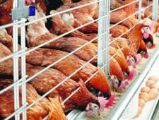 ЕЭК консолидирует усилия по устойчивому развитию птицеводства в ЕАЭС