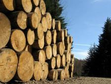 Экспорт лесоматериалов из регионов Сибири в 2017 году увеличился - Новости таможни - TKS.RU