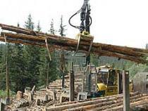 Директору лесозаготовительной компании может грозить тюремный срок за контрабанду леса