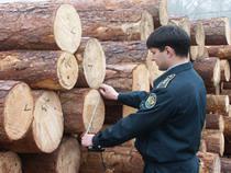 Личинка черного соснового усача обнаружена при досмотре партии экспортных лесоматериалов - Кримимнал - TKS.RU