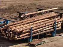 Правительство повысило экспортные пошлины на необработанные лесоматериалы - Новости таможни - TKS.RU