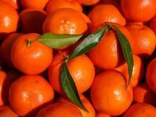 Заморские фрукты «из будущего» задержались в порту Петербурга