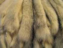 ФТС не подтверждает установление окончательных сроков ввода обязательной маркировки меховых изделий - Новости таможни