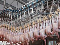 Россия и США подписали новое соглашение по торговле мясом и птицей - Новости таможни - TKS.RU
