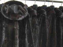 Норковые шубы из новых коллекций первой оценивает таможня - Кримимнал - TKS.RU
