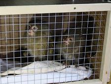 Обезьянок и фазанов обнаружили таможенники в Брянской области