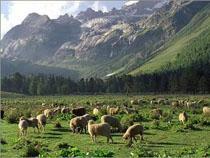 Россия открыла границу для европейского скота - Обзор прессы - TKS.RU